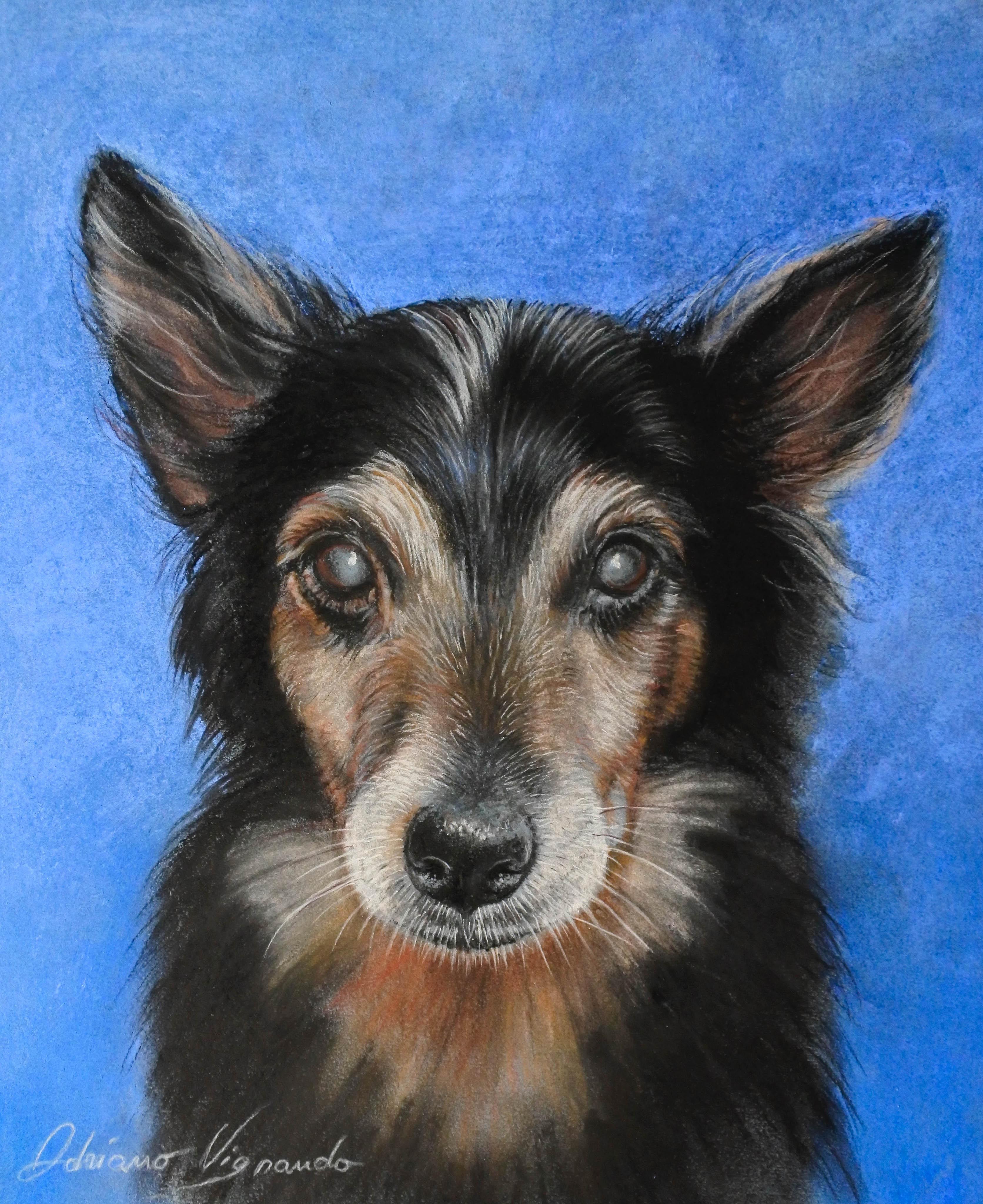 Ritratto di cane cieco